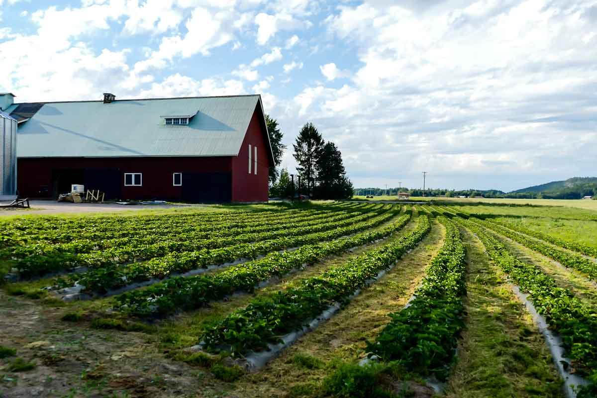 vakantieboerderij Nederland