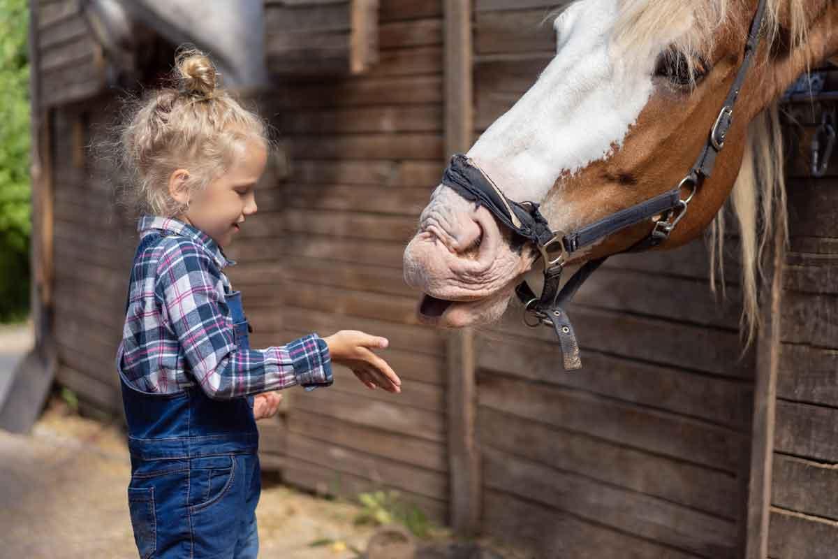 Vakantieboerderij Nederland kleuter met paard